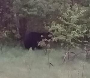 bear near S