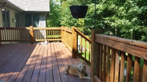 dogs sunning on porch